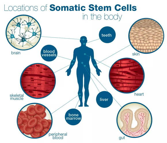干细胞抗癌让绝症不再「绝」!
