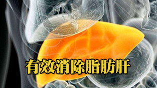 消除脂肪肝