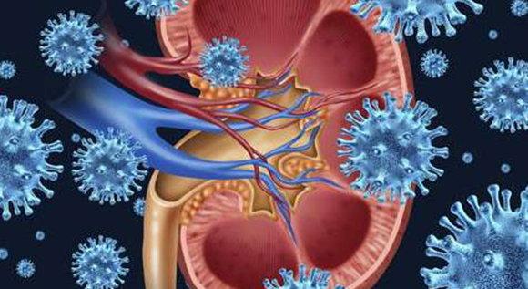 腎炎會不會影響性生活?