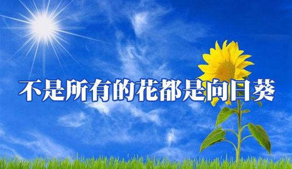 不是所有的花都是向日葵
