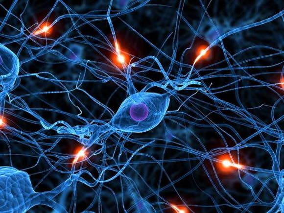 幹細胞真的能抗衰老嗎?